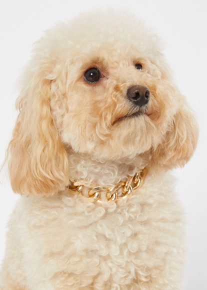 gold chain link pet collar - Main Image