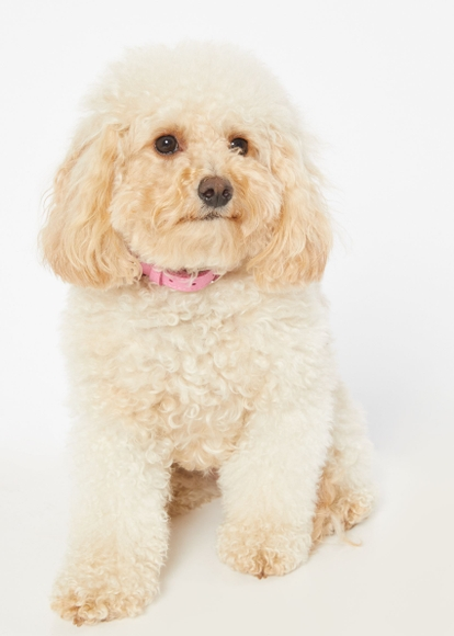 pink rhinestone pet collar - Main Image